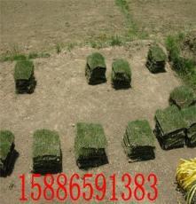 供应 十堰草皮优质价格