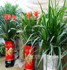 供应 一叶兰盆景 铁树盆景 散尾葵等观叶植物盆景