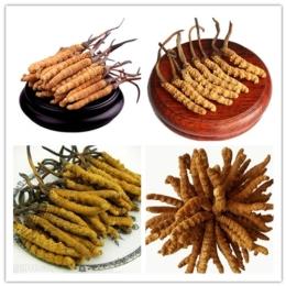 冬虫夏草回收与食用方法推荐虫草收购价格