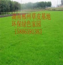 邵阳马尼拉草皮草皮 环保价格