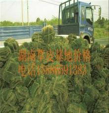 鹰潭草皮 价格