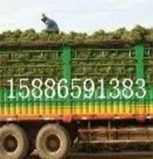 供應貴州貴陽草皮報價--貴州玉龍草