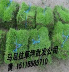 衡陽草皮(衡陽馬尼拉草皮)價格