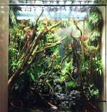 供应湖南长沙/重庆/浙江/江西生态雨林缸、大型鱼缸找植来植趣