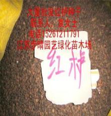 出售 金桂种子 国槐种子 花卉种子 种苗 绿化苗木等