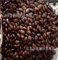 公司批发 皂角种子 花卉种子种苗 当年新种子