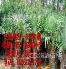 供应美人蕉 剑麻 江苏步晴苗木场、