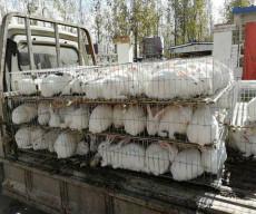 哪里有正規種兔養殖場種兔現在什么價格