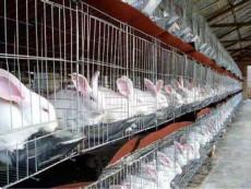 貴州新西蘭種兔多少錢一只新西蘭肉兔養殖場