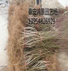 桃树苗价格,武汉桃树苗,出售果树苗、绿化苗