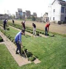 出售全国草坪 高羊茅 马尼拉 草皮 草坪 四季青草坪 工程草坪