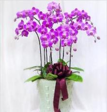 厂家供应观赏植物 室内植物 蝴蝶兰