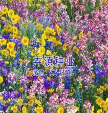 出售野花組合圖片,價格 卉源園藝