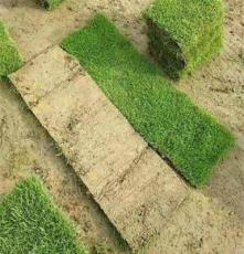 马尼拉草皮 湖南邵阳城市绿地绿化用的 草种草籽批发价格