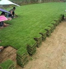 马尼拉草皮 遂宁边坡绿化治理用的结缕草出售价格 优惠促销