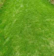 马尼拉草皮 广西桂林楼盘环境绿化用的 绿化草坪批发价格
