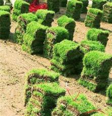 马尼拉草坪 江西抚州 庭院绿化用的种植草皮批发价格