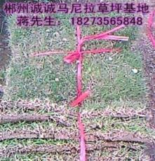 湖南草皮批發價格