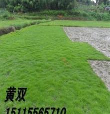 郴州草坪基地