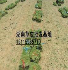 銅仁護坡草皮(懷化護坡草坪)