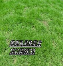 重慶護坡草坪(廣東護坡草皮)