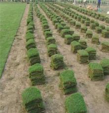 马尼拉草坪优质供应商