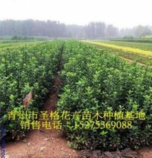 鄉城縣花卉苗木批發市場圣格花卉提供報價