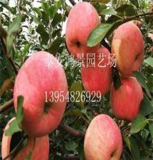 蘋果苗批發,蘋果苗價格,山東果樹苗,綠化苗出售