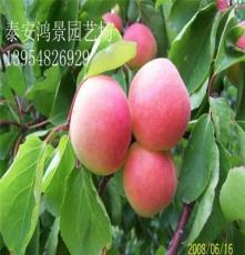 桃樹苗價格,上海桃樹苗,出售果樹苗、綠化苗