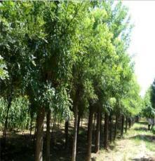 重慶苗木種植林業開發批發廠家 巫山縣宏艷農業開發有限公司