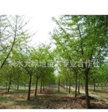 供應優質綠化苗木、各種工程小苗、工程用苗 樹苗 小苗批發