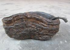 华豫之门节目全集评估中心 征集灵芝化石