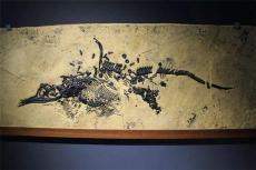 华豫之门怎样报名出手去哪 征集鱼龙化石