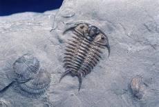 近期三叶虫化石交易收购的地方