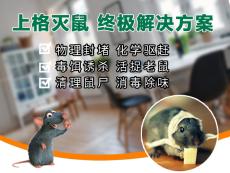 上海除螞蟻公司除老鼠公司