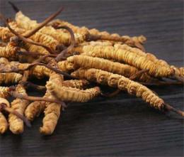 中山回收冬虫夏草真实有效报价-虫草回收商
