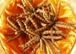 惠阳回收冬虫夏草多少钱-一斤虫草回收价格