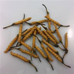 陽山回收冬蟲夏草真實有效報價-蟲草回收商