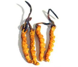 肇慶回收蟲草報價-冬蟲夏草回收多少錢一克