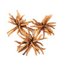 增城冬蟲夏草回收多少錢-回收冬蟲夏草價格