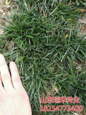 园林绿化草坪种子价格类型