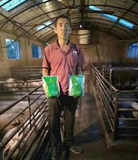 豬催肥用什么藥好豬催肥藥哪個牌子的比較好