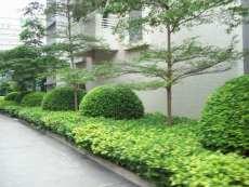 東莞市政綠化養護/園林景觀公司/廣東宏青
