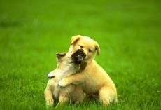成都宠物狗狗去世后尊重的处理方式