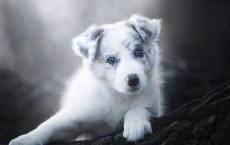 宠物去世后正确的处理方式有哪些