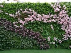 西安綠植墻廠家支持來圖定制綠植墻制作