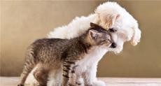 宠物去世后怎么找正规宠物火化