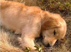 家中狗狗去世后火化正确的处理方式