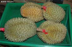 马来西亚榴莲青岛进口报关行