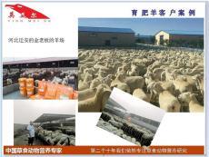 育肥羊的養殖方法 科學 合理的育肥羊方法